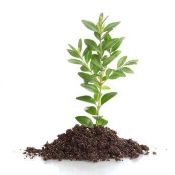 Planta na Terra